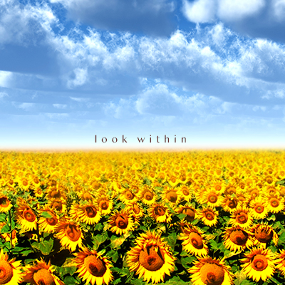 Field of Sunflowers with words Look Within on the Horizon